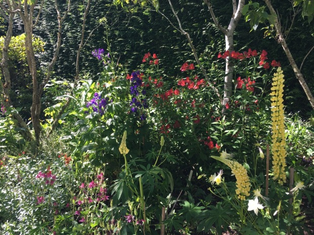 Lupins and Aquilegia, Delphinium and Alstroemeria create a gorgeous pop of colour