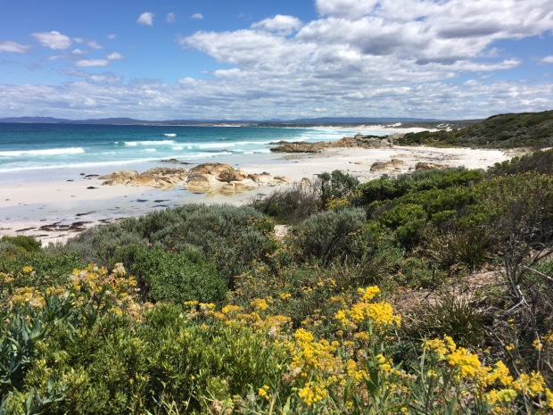 As yet unidentied wildflowers at the Bay of Fires