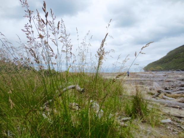 Beautiful grasses against a stormy sky where the Heaphy river meets the sea