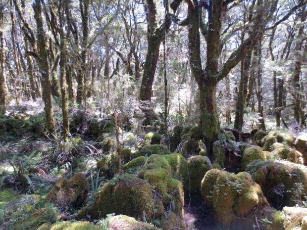 The 'Enchanted Forest'; limestone remnants of the beech forest