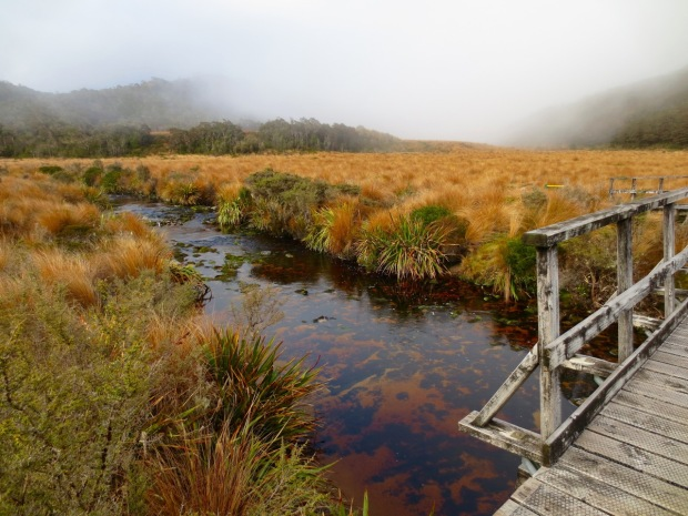 Tussock grass en masse! Stunning in the misty, blowy conditions we experienced; so much movement and life. Even the water is so rich, coloured by the tannin of vegetation further upstream