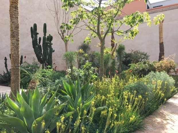 The yellow Bulbine frutescens looks magical next to Agave attenuata, one of Sydney's most common plants. So why haven't I seen (or indeed used myself!) this combination before?