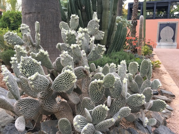 Clever design to link cactus to water feature, or just happy coincidence?
