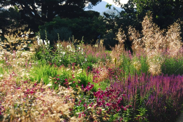 It really is hard to beat a deep, modern, perennial planting. Photo: Michael McCoy