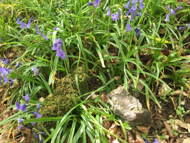 Flint, moss and chickweed amongst the bluebells