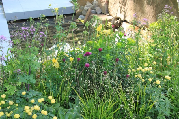 Just the prettiest colours and flower shapes in Cleve's 2016 Chelsea garden