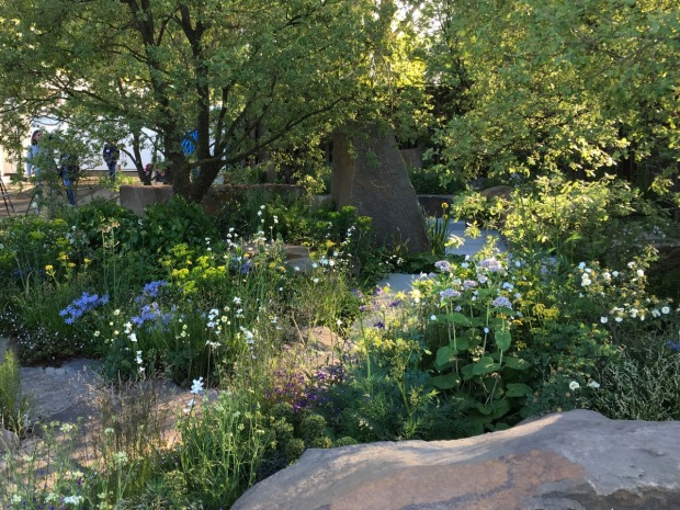 The mix of under storey planting is divine in Cleve's M&G Chelsea garden