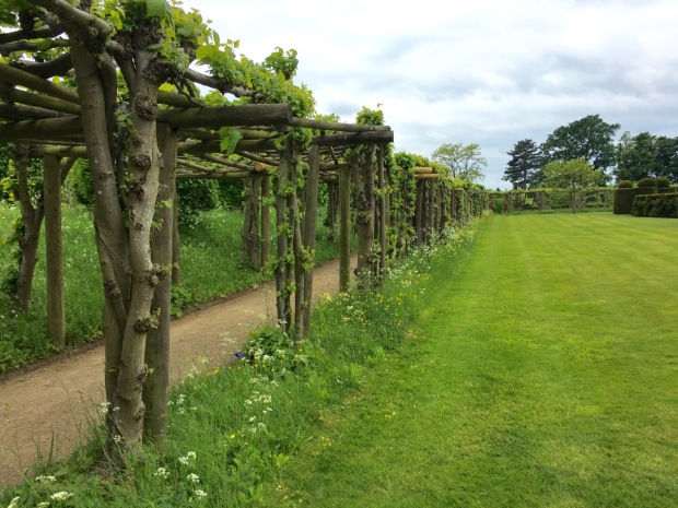Lime pergola at Hatfield House