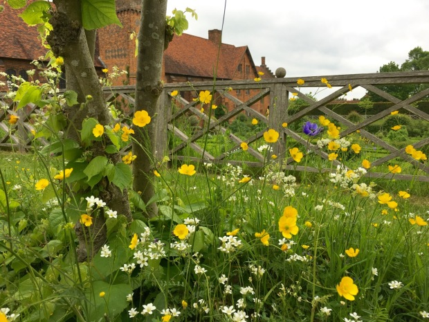 Native buttercups, saxifrages and cow parsley mixed with anemones at Hatfield House