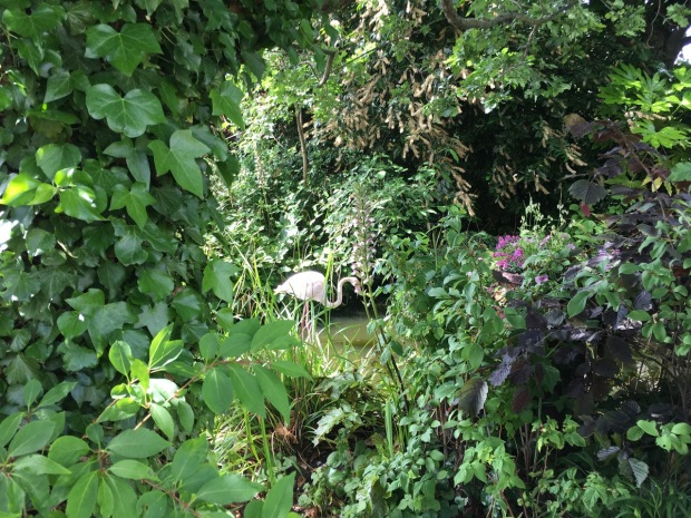 The Woodland Garden is incredibly rustic. You feel you are walking down a country lane in Kent...until you spot a Flamingo through the foliage