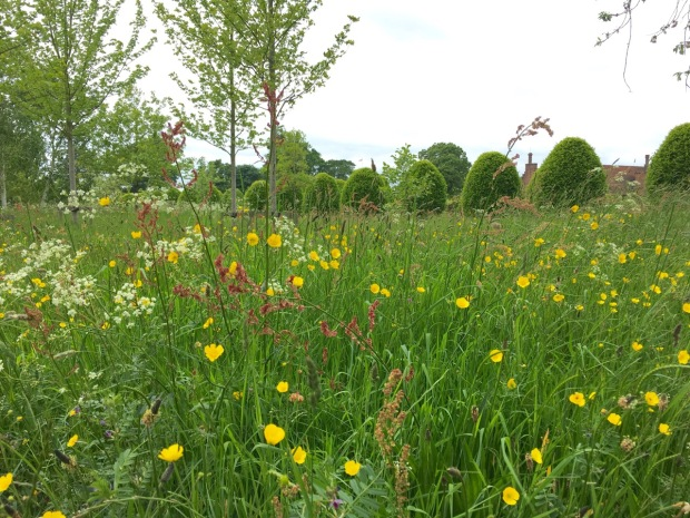 Vetch, cow parsley, sorrel, buttercup and plantain