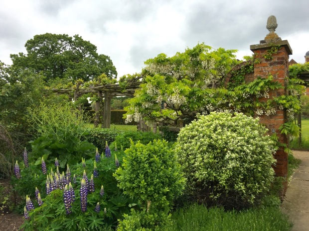 Wisteria and lupins at Hatfield House