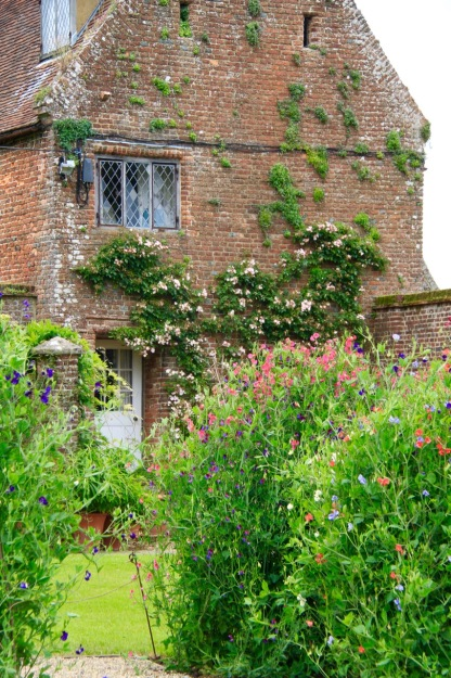 Invisibly-staked sweet peas, of incredible health, sit in front of the house with a mix of self sown and planted wall climbers