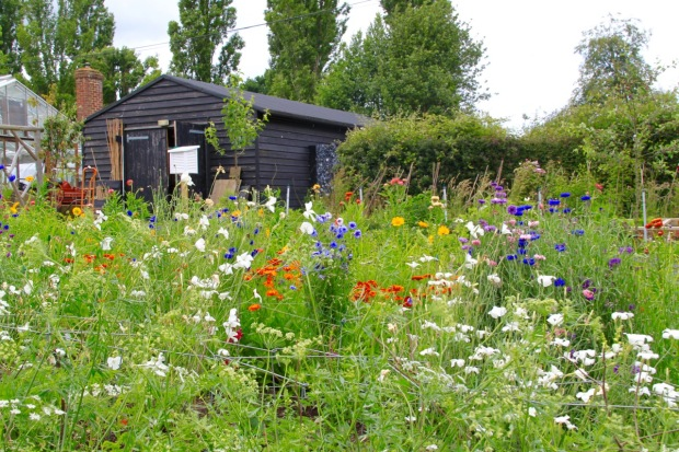 Primary colours jostle for space in the Cutting Garden at Sissinghurst. The black shed provides a powerful backdrop to these strong colours, demonstrating the thought put into even the back of house areas