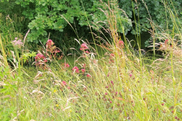 Valeriana officinalis and Trifolium pratense mix with grasses above the lake in a scene that looks entirely natural, yet is almost certainly precisely planned