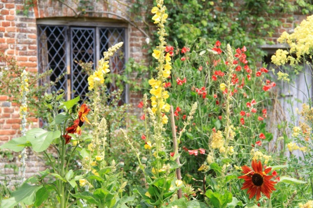 Wonderful colour combinations in the Cottage Garden
