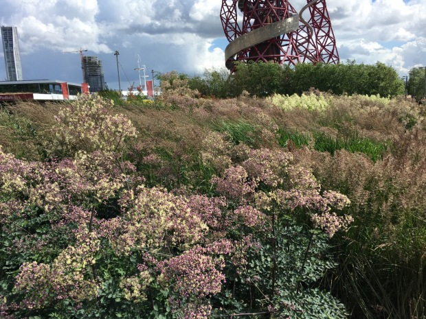 I adored the movement of these tall grasses and perennials and the tones which tied in with the ArcelorMittal Orbit behind