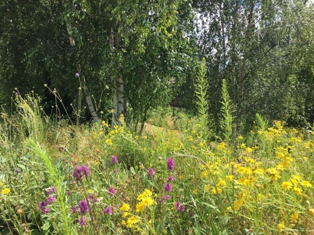 Native orchids in this enhanced English meadow style planting