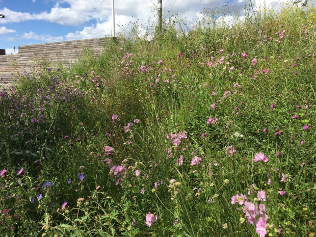 Soft meadow planting at the Queen Elizabeth Olympic Park