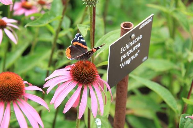 A garden full of wildlife is a happy-feeling garden!
