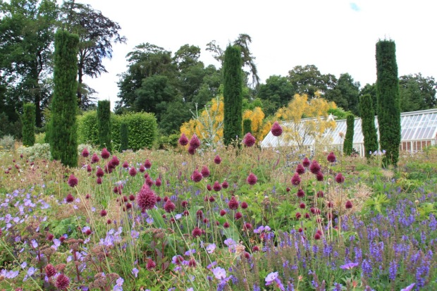 Alliums and conifers provide vertical elements to the soft planting at Broughton Grange