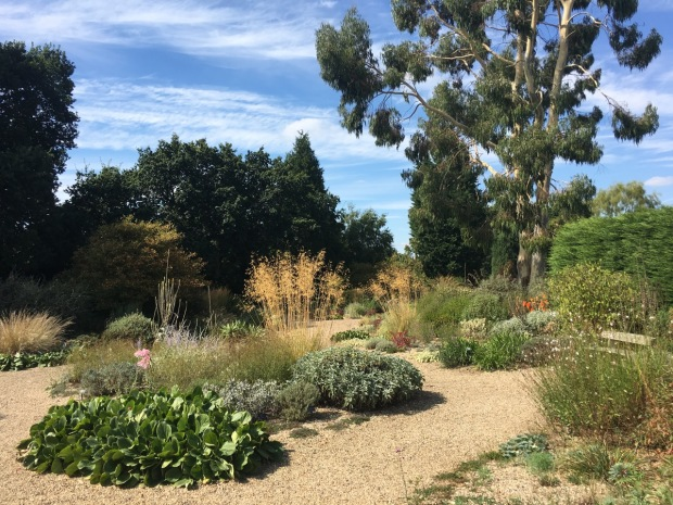 Beth Chatto's Gravel Garden, complete with an enormous Eucalyptus