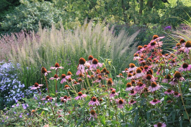 Echinacea, Geranium and Aster in the Reservoir Garden at Beth Chatto's
