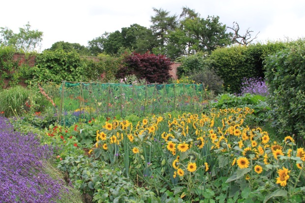 Fruit, vegetables and cutting flowers at Broughton Grange