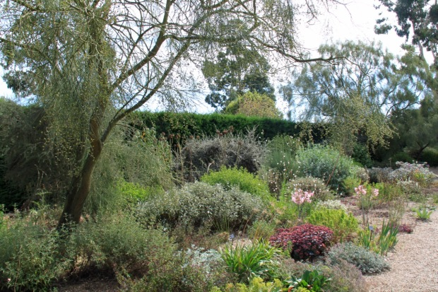 The pinks of Sedum, Gaura and Amaryllis provide soft colour in the Gravel Garden