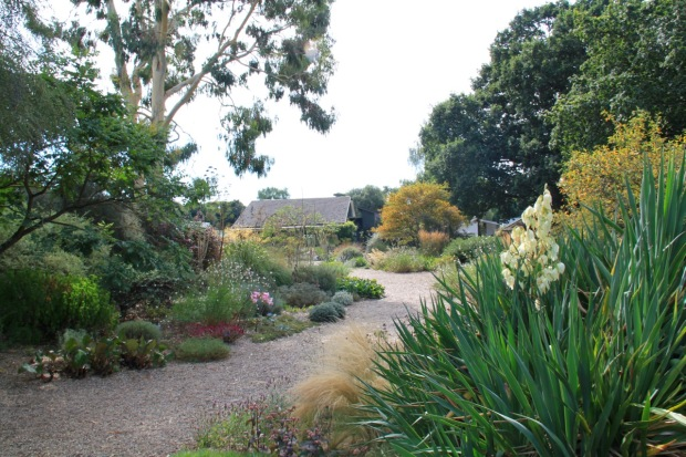 Yucca provides bold, architectural structure in the Gravel Garden at Beth Chatto's garden
