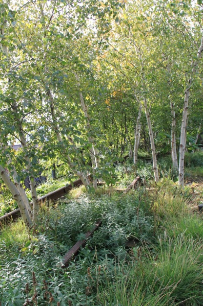 A grove of silver birch planted between the original rail tracks on the High Line