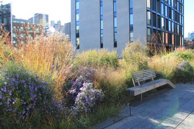 Asters and grasses provide a soft feel on the High Line