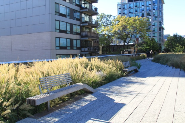 Calamagrostis brachytricha catches the soft autumn sun on the High Line