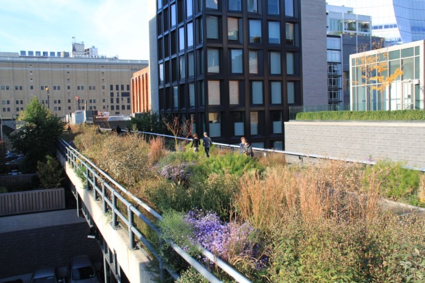 Every roof terrace in sight had its own plantings near the High Line