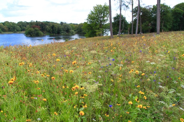 Nigel Dunnett-designed meadow planting at the edge of Lake Trentham