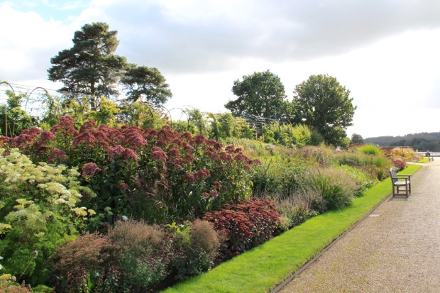 Piet Oudolf-designed border in front of Trellis Walk and the David Austin Rose Border at Trentham