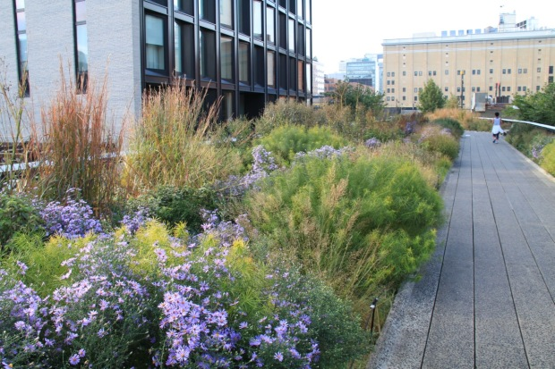 Piet Oudolf's High Line planting is a classic example of enhanced nature