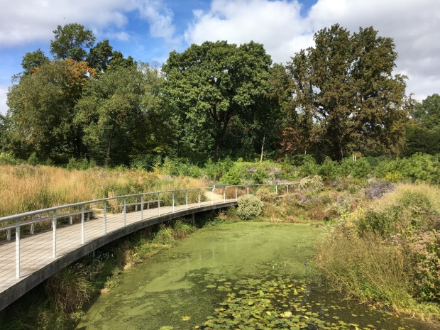 Meadow meets pine barrens meets pond at Brooklyn Botanic Garden