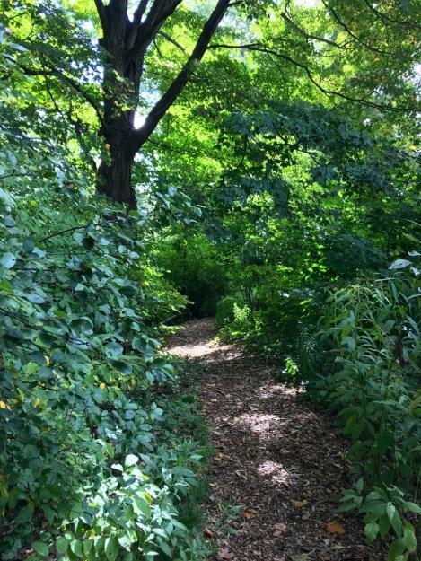 Native Flora Garden at Brooklyn Botanic Garden, New York