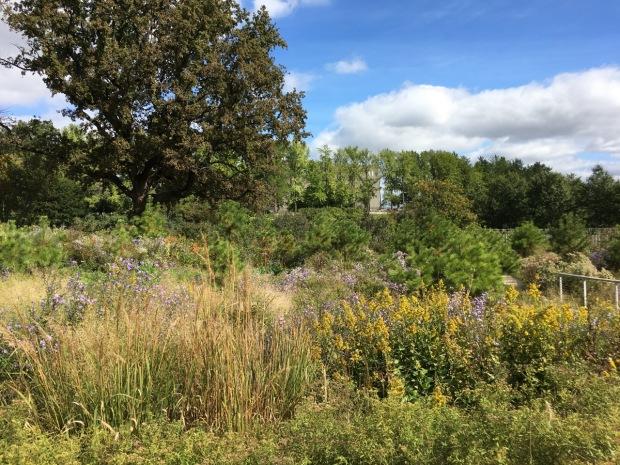 Naturalistic planting at Brooklyn Botanic Garden