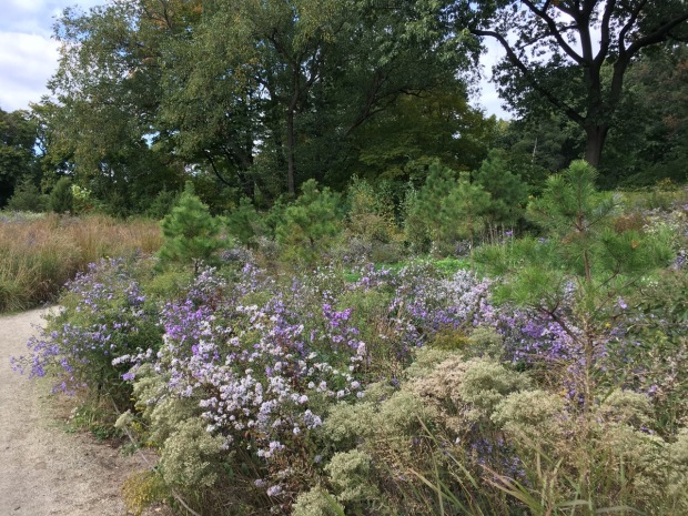 Pines and asters looks so wonderfully natural in New York