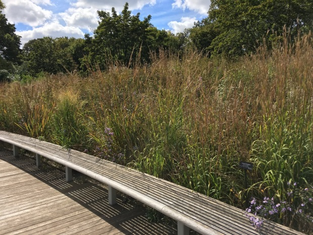 The bench invites to you to be consumed by the meadow in the Native Flora Garden