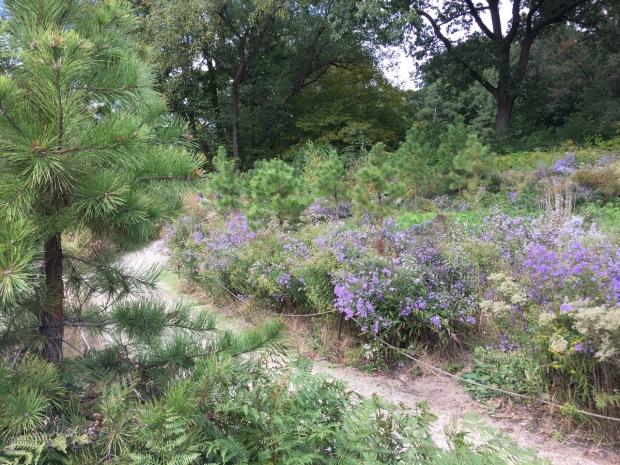 The native pine barrens at Brooklyn Botanic Garden