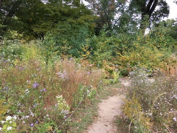 The new meadow at Brooklyn Botanic Garden
