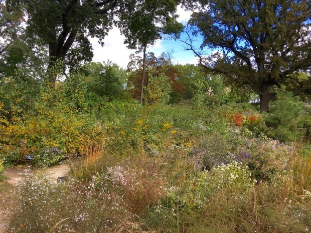 The new Native Flora Garden at Brooklyn Botanic Garden