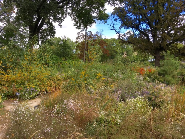 The new Native Flora Garden at Brooklyn Botanic Garden