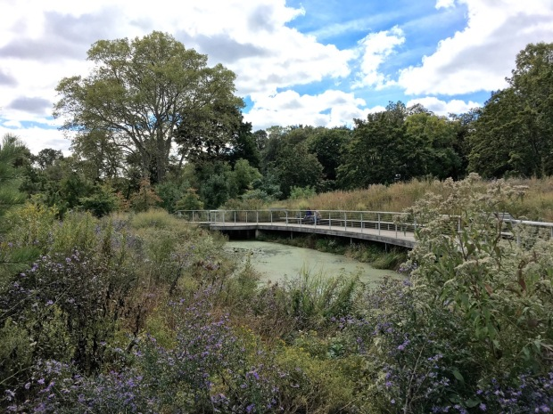 The pond and walkway at the Native Flora Garden has been beautifully designed