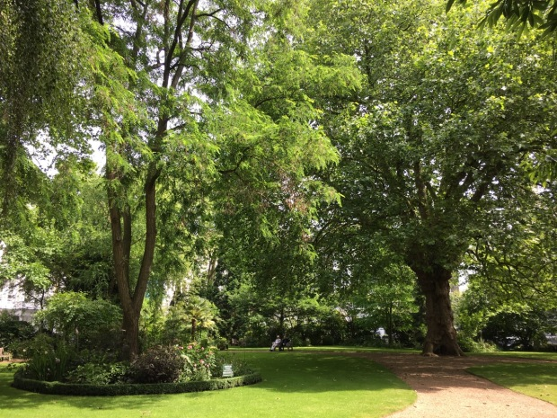 A large plane tree takes pride of place and provides huge presence to Courtfield Gardens West, London