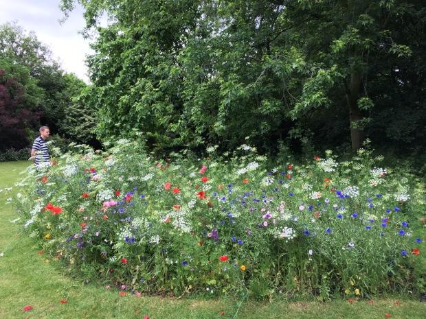 Meadow planting at Cadogan Gardens South