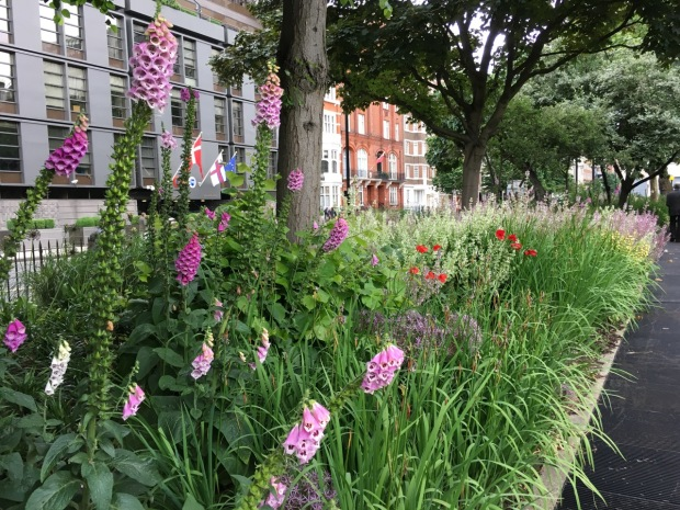 Mixed planting at Cadogan Gardens North